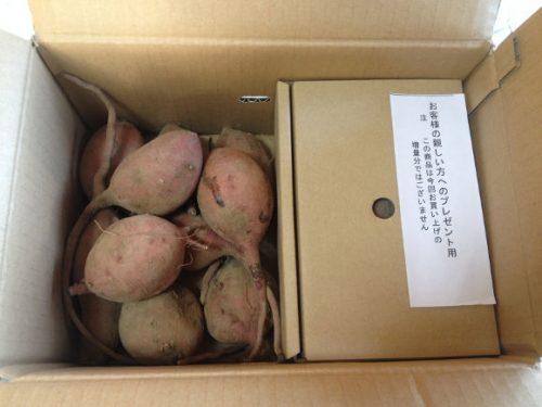根付きの種子島安納芋